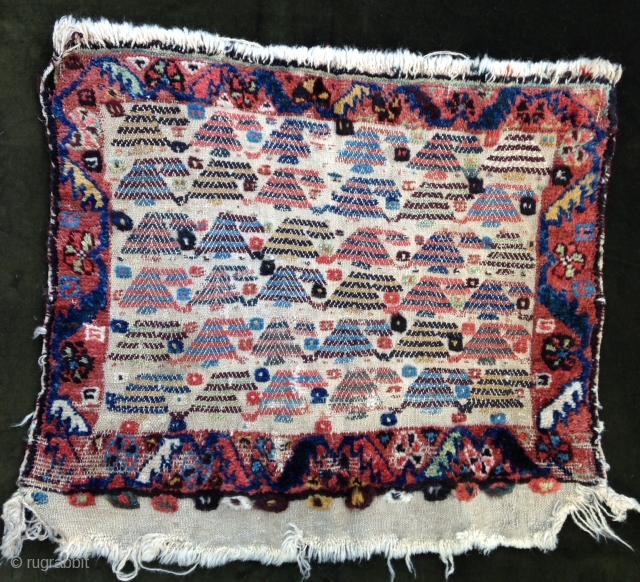 September Sale : Pretty and unusual Bagface from Qashgayi nomads.