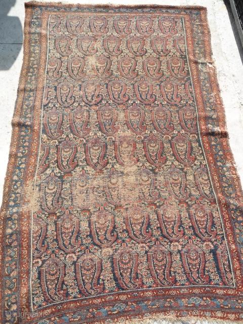 antique senneh rug  19th century rug 4 ft x 7 ft