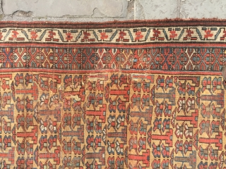 Lovely pair antique north west Persian shrub design runners pre 1880 all wool and natural dyes