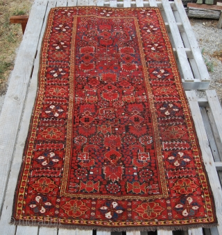 Beshir rug. Cm 110x212. Late 19th century. Good cond. Very nice medium size. Seven colors: 3/4 shades of madder red, yellow, light and dark indigo blue, green, 2 browns, white cotton, black.  ...