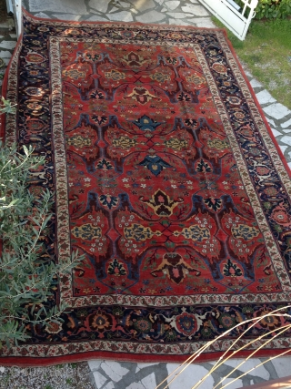 BIDJAR carpet circa 1880 in very good condition