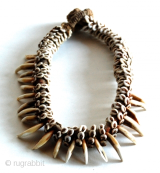 "Papua New Guinea Dog Tooth Neckpiece, purchased in 1980 from James Willis Gallery SF during the Malcolm Kirk ""Man As Art"" photography Exhibit/Show.