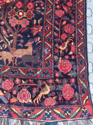 Antique Persian Bakhtiary village rug displaying a tree of life design with lot of animals, wool foundation. Age: late 19th century, size: ca. 370x210cm / 12'1''ft x 6'8''ft good condition